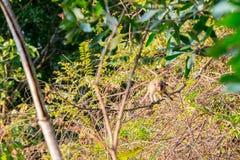 Junger Affe, der im Wald sich versteckt Stockfotografie