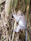 Junger Affe, der lernt zu klettern Lizenzfreie Stockfotos