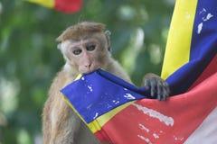Junger Affe, der mit buddist Flagge spielt Lizenzfreie Stockfotos