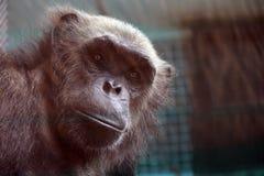 Junger Affe in einem Käfig Lizenzfreies Stockfoto
