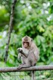 Junger Affe sitzen an der Metallwand Lizenzfreie Stockfotografie