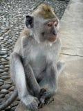 Junger Affe untersucht didstance Stockfotos