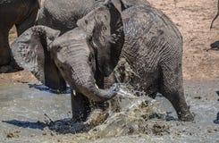 Junger afrikanischer Elefant, der im Wasser spielt Lizenzfreie Stockbilder