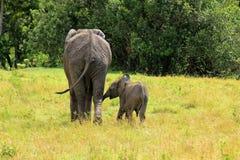 Junger afrikanischer Elefant und seine Mutter lizenzfreie stockbilder