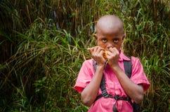 Junger afrikanischer Junge mit hellem rosa Hemd Maiskamm vor hohem tropischem Schilf, Ring Road, Kamerun, Afrika essend Lizenzfreies Stockfoto