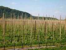 Junger Apfelbaumobstgarten Stockfoto