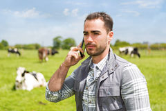 Junger attraktiver Landwirt in einer Weide mit Kühen unter Verwendung des Mobiles Stockbild