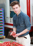 Junger attraktiver Mann, der Tomaten wählt Lizenzfreie Stockbilder