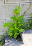 Junger Baum Lizenzfreie Stockfotos