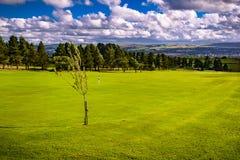Junger Baum auf dem Golfplatz lizenzfreie stockbilder