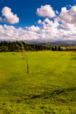Junger Baum auf dem Golfplatz Stockfoto