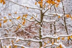 Junger Baum bedeckt mit Schnee Stockfoto