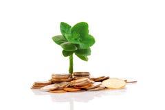 Junger Baum und Münzen Stockbild