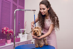 Junger Berufsgroomer, der Scheren beim Pflegen des Hundes im Haustiersalon hält Lizenzfreies Stockfoto