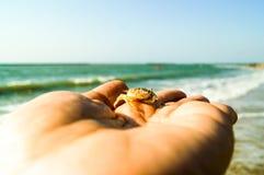 Junger Blick der Seekrabbe an Hand, der klein und in der Hand versteckt worden sein würden Stockbilder