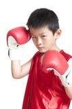 Junger Boxer lizenzfreie stockbilder