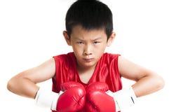 Junger Boxer lizenzfreie stockfotos