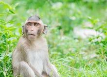Junger brauner Affe, der Furcht ausdrückt Lizenzfreies Stockbild