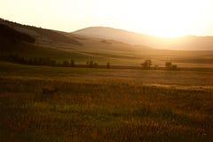 Junger Buck Grazing auf dem Gebiet bei Sonnenuntergang lizenzfreies stockbild