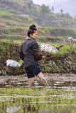 Junger Chinesinlandwirt, der im Schlamm, Reisfeld Knie-tief steht Stockbild