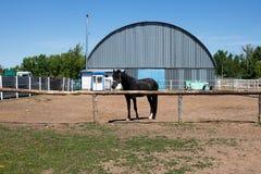 Junger Colt lebt auf der Ranch für das Laufen und isst Heu lizenzfreie stockfotos
