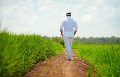 Junger erwachsener Mann, der weg auf Weg durch das Reisfeld geht Stockbilder