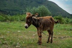 Junger Esel auf dem Feld lizenzfreies stockfoto