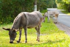 Junger Esel, der grünes Gras an einem sonnigen Tag isst Stockfotos