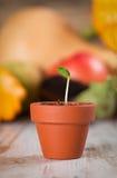 Junger Gemüsesprössling auf einem Holz Lizenzfreies Stockfoto