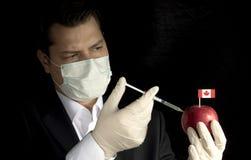 Junger Geschäftsmann, der Chemikalien in einen Apfel mit kanadischer Flagge einspritzt stockfoto