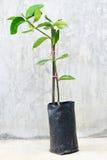 Junger grüner Baum lizenzfreie stockbilder