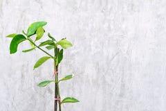 Junger grüner Baum stockfotos