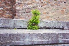 Junger grüner Baum Stockfotografie
