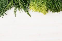 Junger grüner Nadelbaum verzweigt sich mit Kopienraum auf weißem Holztischhintergrund stockfoto