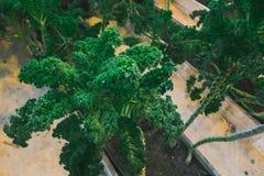 Junger grüner Sprössling im Grundabschluß oben Stockfotos