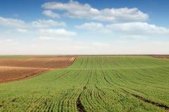 Junger grüner Weizen und gepflogene Feldfrühlingslandschaft Lizenzfreies Stockfoto