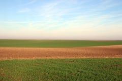 Junger grüner Weizen und gepflogenes Feld Lizenzfreies Stockbild