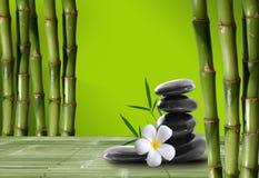 Junger, grüner Bambus im Hintergrund boke Stockfotos