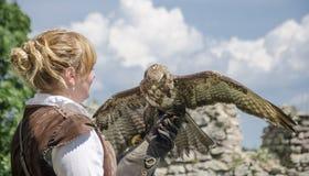Junger hübscher Falkner mit seinem Falken, benutzt für Falknerei, Stockfotos