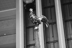 Junger Hahn an Rathaus Stockbilder