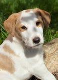 Junger Hund Stockbilder