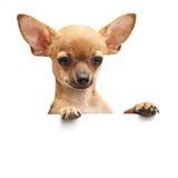 Junger Hund Stockfoto