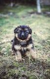 Junger Hund Stockfotografie