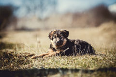 Junger Hund Lizenzfreie Stockfotografie