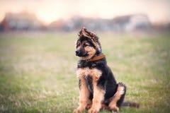 Junger Hund Stockfotos