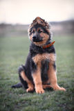 Junger Hund Lizenzfreie Stockfotos