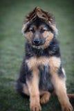 Junger Hund Stockbild