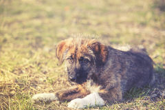 junger Hund auf Gras Stockfotos