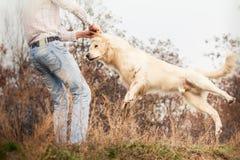 Junger Hund des goldenen Apportierhunds Lizenzfreie Stockbilder
