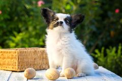 Junger Hund und Eier lizenzfreies stockbild